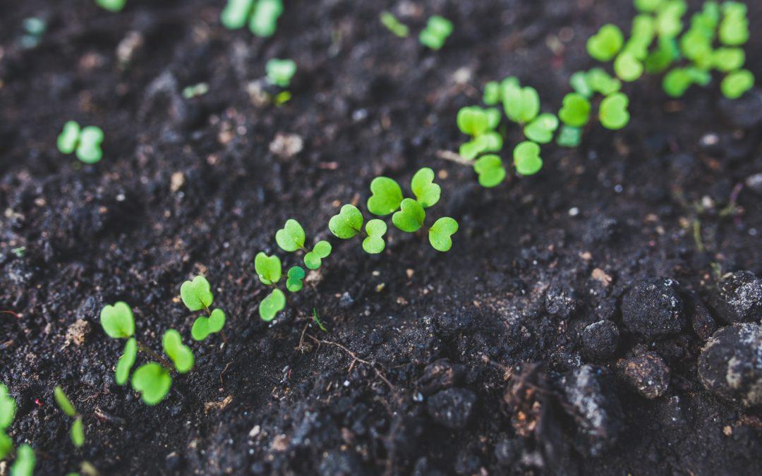 Ontwerp/Beplanting